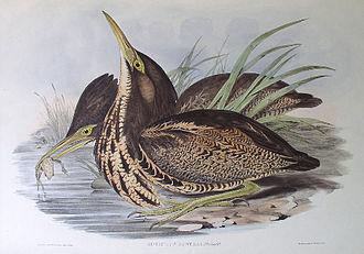 Cecil Hoskins Nature Reserve - Image: Bitterngould
