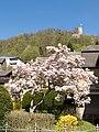 Blühender Baum Biedenkopf.jpg