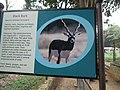 Black buck info board at Bannerghatta National Park 8660.JPG