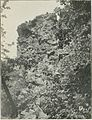 Bluffs on the Iowa River - History of Iowa.jpg