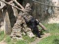 BonoboFishing01.jpeg