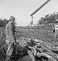 Bosbewerking, arbeiders, boomstammen, Bestanddeelnr 251-9735.jpg