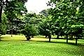Botanic garden limbe33.jpg