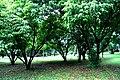Botanic garden limbe65.jpg