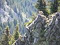 Bouquetins à la Roche Parnal - panoramio.jpg