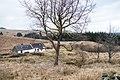 Brattleburn Bothy - panoramio.jpg