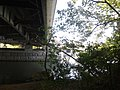 Bridge seen from Theodore Roosevelt Island.jpg