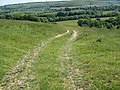 Bridleway, Woodlands Down - geograph.org.uk - 1334503.jpg