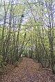 Bridleway in Blean Wood (3) - geograph.org.uk - 1559201.jpg