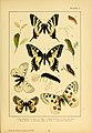 British and European butterflies and moths (Macrolepidoptera) (Plate I) (6466285995).jpg