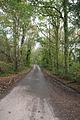 Broadhembury, lane at Kentis Moor - geograph.org.uk - 74182.jpg