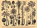 Brockhaus and Efron Encyclopedic Dictionary b44 658-1.jpg