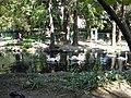 Bucuresti, Romania, Parcul Cismigiu; B-II-a-A-19655 (Lacul Lebedelor 3).JPG