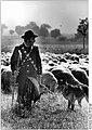 Bundesarchiv Bild 183-1986-0731-025, Schäfer mit Hund und Herde.jpg