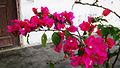 Bunga kertas (15).jpg