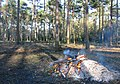 Burning cleared underwood, Kingshat, New Forest, National Park, Hampshire - geograph.org.uk - 956156.jpg