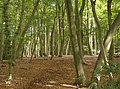 Busgrove Wood - geograph.org.uk - 593918.jpg