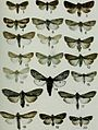 Butterflies and moths of Newfoundland and Labrador - the macrolepidoptera (1980) (20323029548).jpg