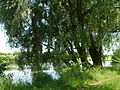 C42-Limbacher-Teichgebiet-Herbst.JPG