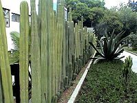 Cactus fence, House of Frida and Diego.jpg
