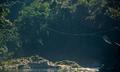 Caerostris darwini web span.png