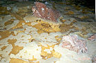 Calcite rafts 285 1 Jewel Cave.jpg