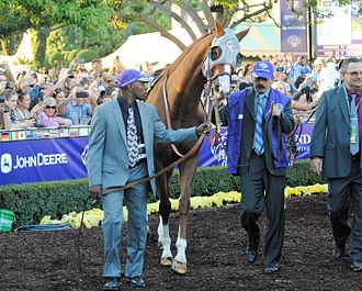 2016 Breeders' Cup Classic - California Chrome before the Classic