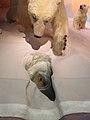 Canadian Museum of Nature, McLeod St, Ottawa (492052) (9450563124).jpg
