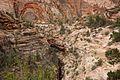 Canyon Overlook Walk; Zion National Park (3444010304).jpg