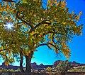Canyonlands National Park…Needles area (6293956229).jpg
