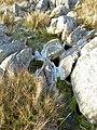Carnivorous rocks^ - geograph.org.uk - 981440.jpg