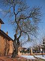 Castanet-Tolosan - 20120209 (1).jpg