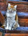 Cat (8228415178) (2).jpg