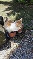 Cat pooping.jpg
