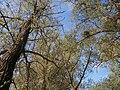 Cherkas'kyi district, Cherkas'ka oblast, Ukraine - panoramio (488).jpg