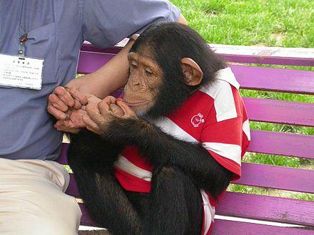 殺 処分 パン くん チンパンジー チンパンジー パン