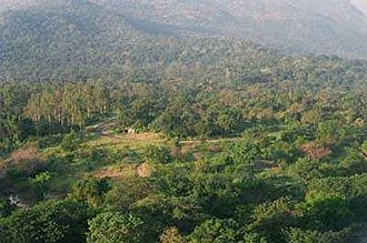 Chinnar Wildlife Sanctuary - View of Chinnar montane rain forest