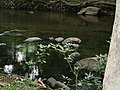 Chinnar River @ Chinnar Wildlife Sanctuary - panoramio (5).jpg