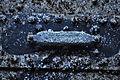 Chittenden Locks during large lock maintenance 008 - year-old zinc anode.jpg