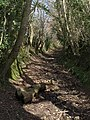 Chudleigh Bridleway 3 - geograph.org.uk - 750134.jpg
