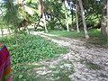 Chulu Beach - Tinian - panoramio - kajikawa.jpg