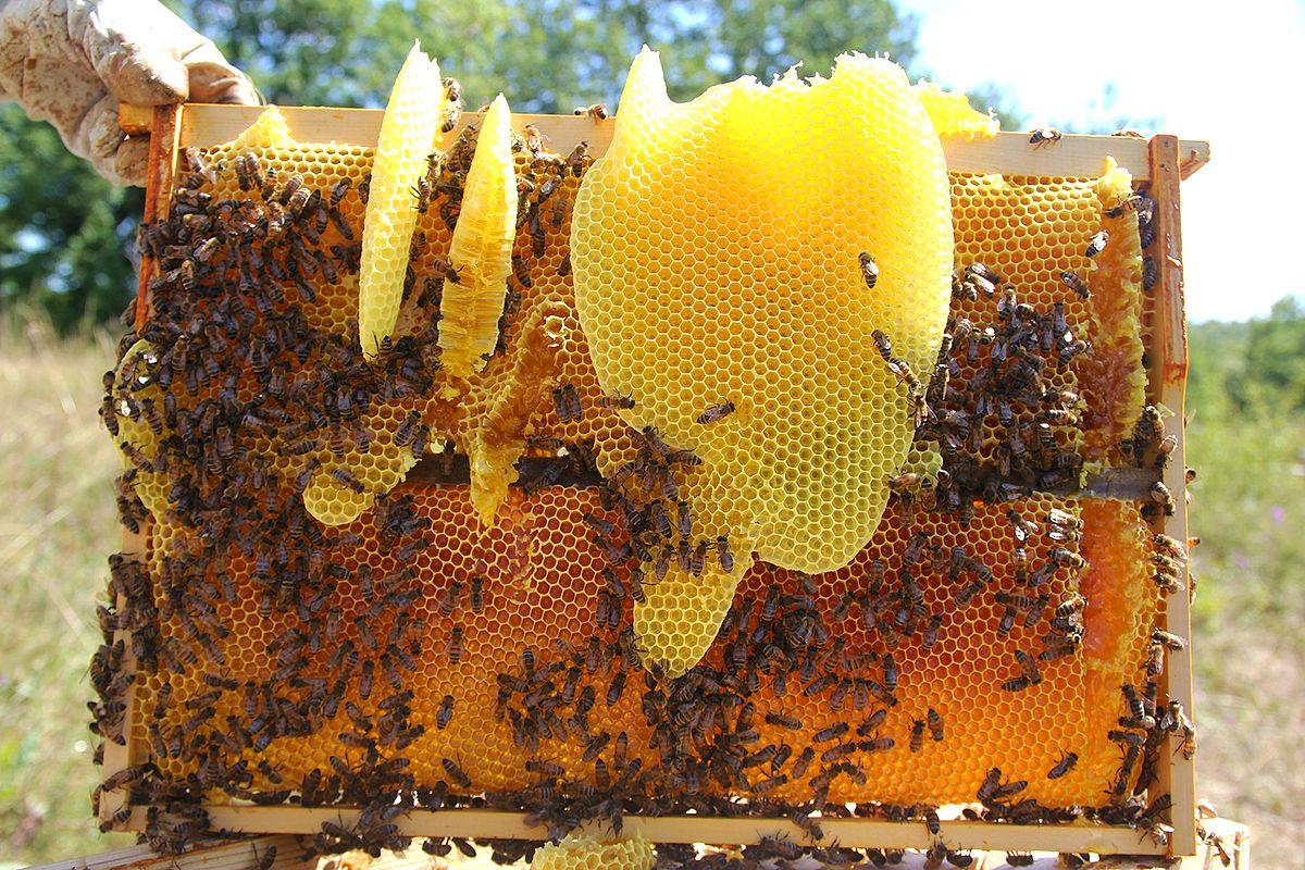 cire d 39 abeille wikip dia. Black Bedroom Furniture Sets. Home Design Ideas