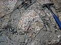 Clast-rich impact pseudotachylite (Sudbury Breccia, Paleoproterozoic, 1.85 Ga; Windy Lake Northwest roadcut, Sudbury Impact Structure, Ontario, Canada) 72 (33881340828).jpg