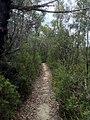 Cliff Top Track - panoramio (11).jpg