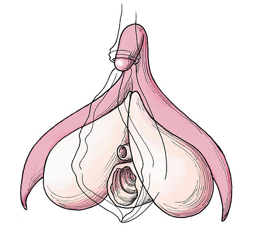 Image Of Hooded Clitoris