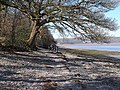 Coast path at New Barns. - geograph.org.uk - 1230313.jpg