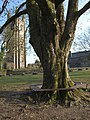 Coke can on tree seat, Widecombe - geograph.org.uk - 1237773.jpg