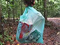 Collecting polythene bags in a forest.jpg