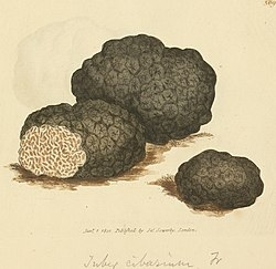 Coloured Figures of English Fungi or Mushrooms - t. 309.jpg