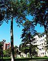 Communication University of China campus 7.jpg